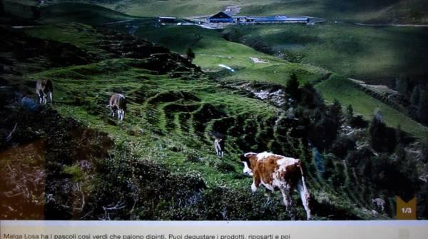 La schermata di CarniaMapp con la via del latte per arrivare ad alcuni alpeggi. Clicchi sui luoghi e vedi i paesaggi